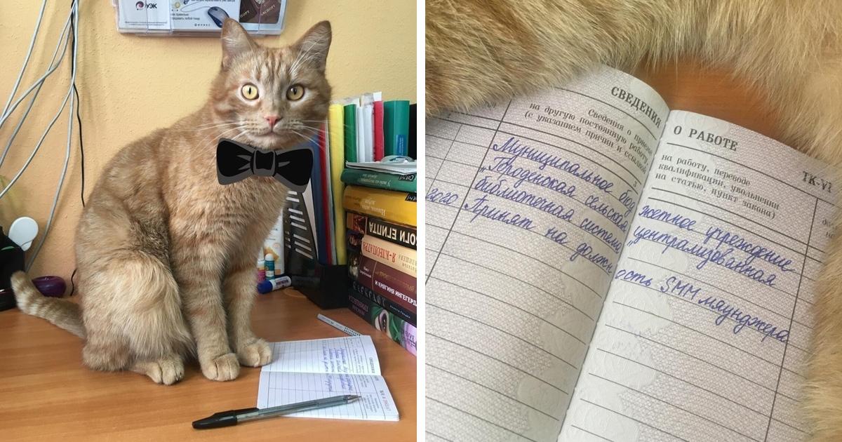 Библиотека в Тверской области взяла на работу кота Степана. Теперь он SMM-мяунджер с зарплатой и трудовой!
