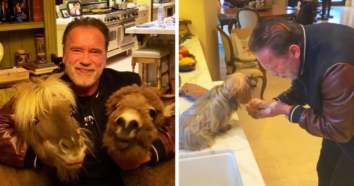 Арнольд Шварценеггер сидит дома на карантине, но не скучает: он учит своих домашних животных гигиене
