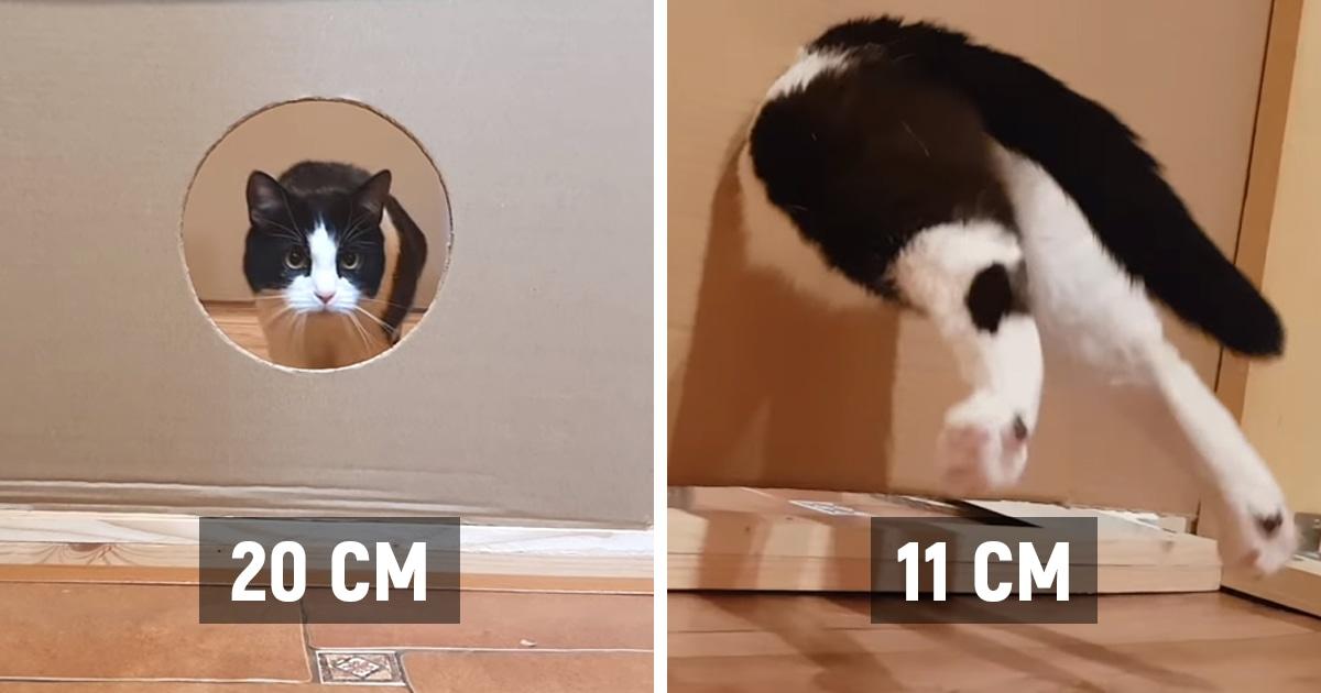 Хозяева проверили, в дыру какого размера их кот не пролезет. Тот ещё раз доказал, что коты — немного жидкость