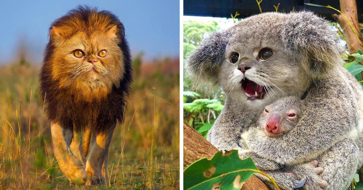 Москвичка представила, как выглядели бы животные, будь у них морды котов. И это фауна, которую мы заслужили!