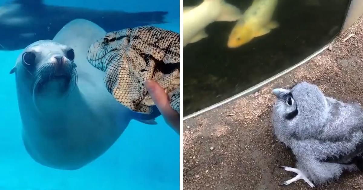 Пока люди сидят на карантине, животные в зоопарках знакомятся друг с другом. Их реакция — отдельный вид милоты