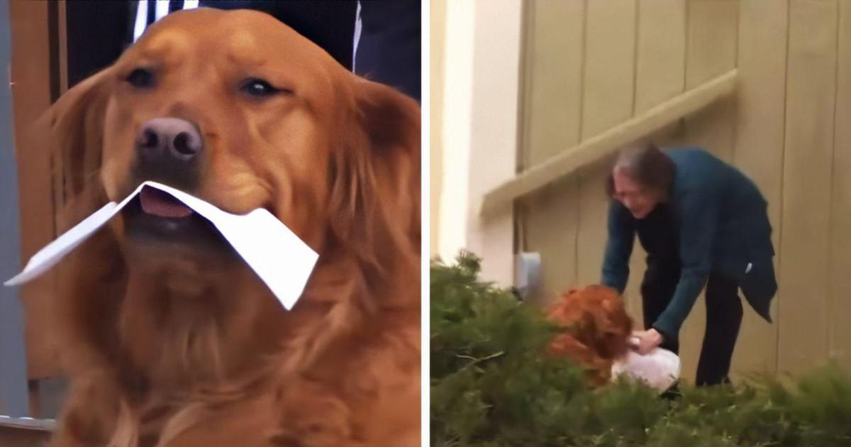 Хозяйка решила помочь соседке на карантине с помощью своего пса. И хороший мальчик стал службой доставки