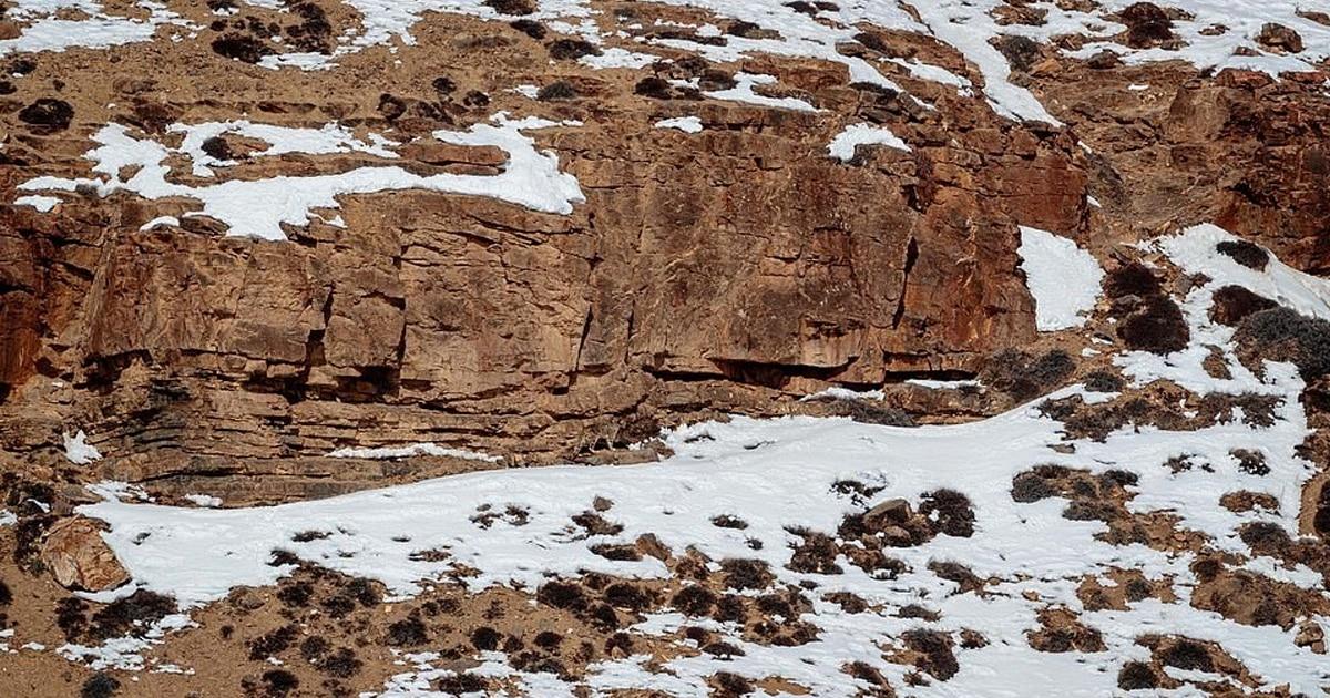 Фотографу удалось снять ирбиса в дикой природе. Его камуфляж хорош, и чтобы его заметить, нужно постараться