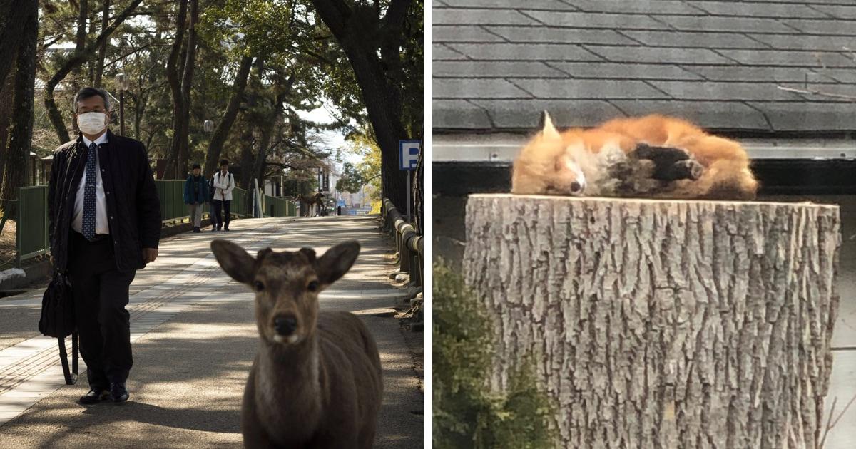 Пумы, олени и койоты: каких ещё диких животных замечали люди на улицах во время карантина