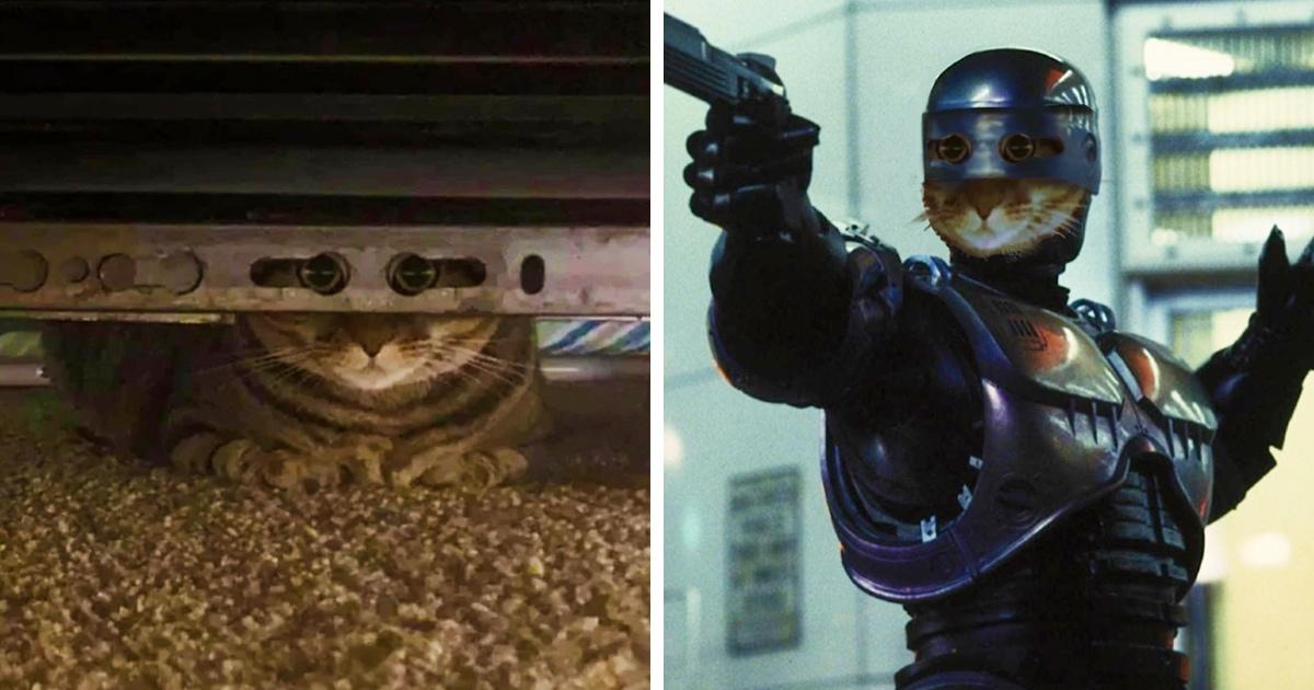 Кот посмотрел в камеру через отверстия, будто надев маску. Теперь его фотошопят к героям, чья внешность скрыта