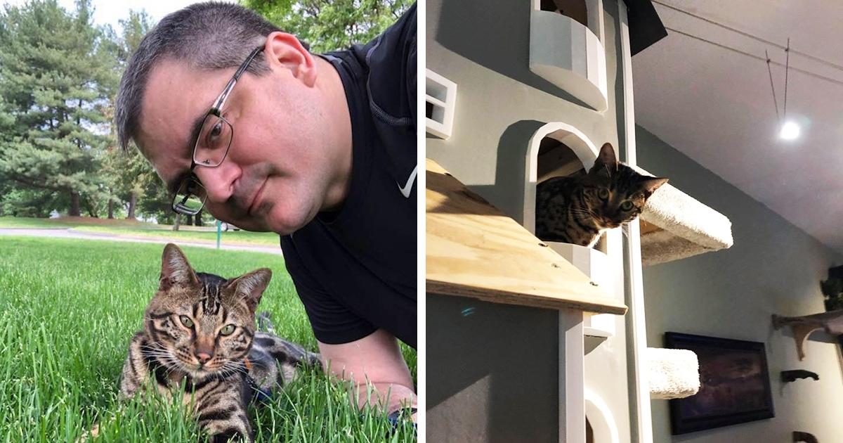 Хозяин решил построить домики своим котам и сделал настоящие кошачьи особняки. С подвесным мостом!