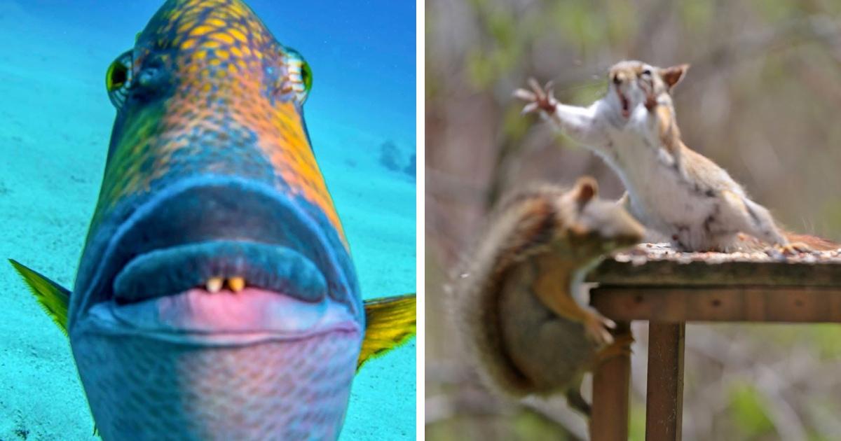 Пользователи сети делятся своими снимками животных, которые у них получились так плохо, что даже хорошо