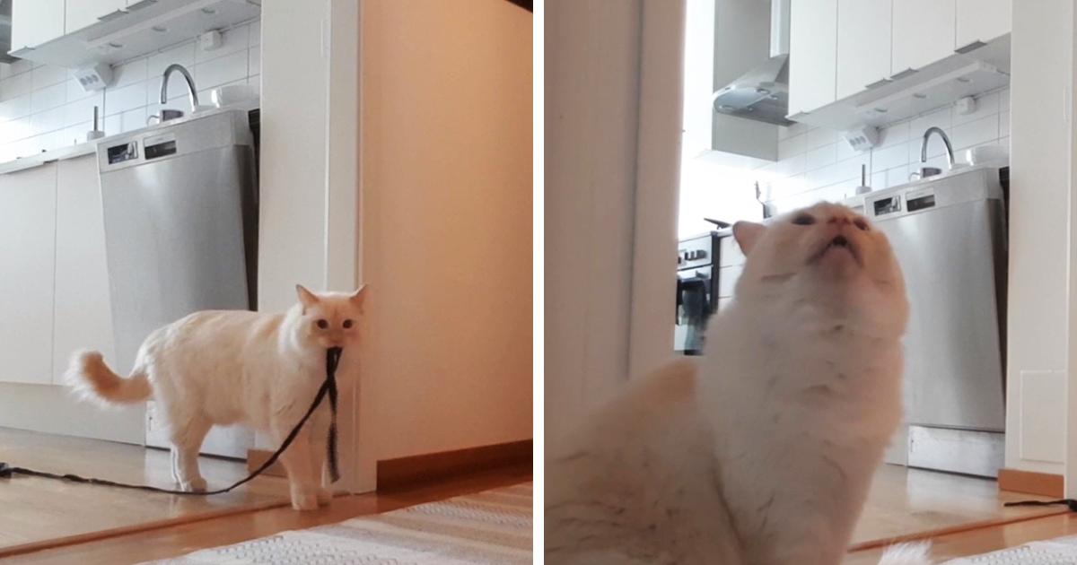 Хозяин показал, как коты переживают одиночество. Он ушёл из дома на полчаса и записал своего питомца на видео