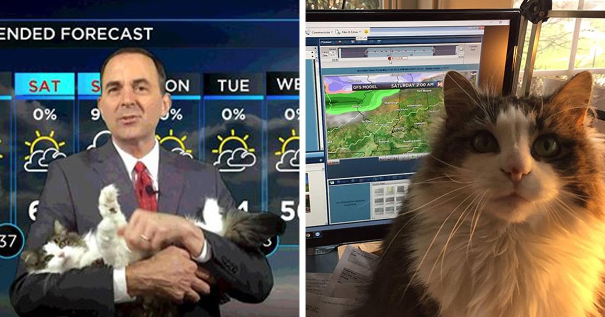 Синоптик на карантине ведёт прогноз погоды вместе со своей кошкой. И она настоящая звезда эфира!
