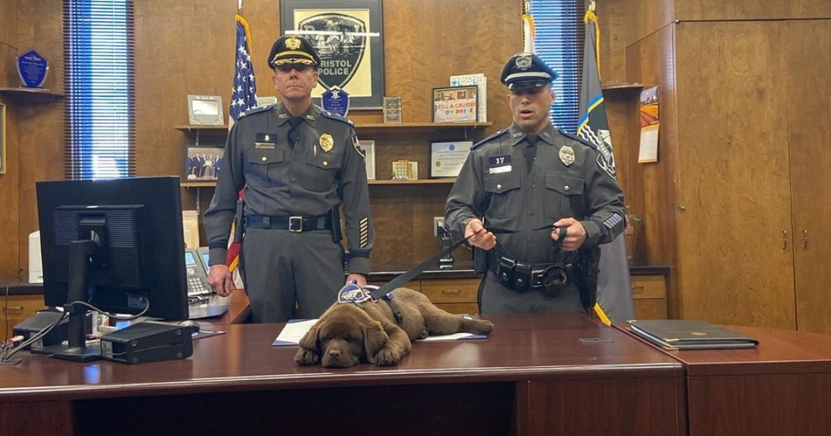 Щенок Броди продрых всю церемонию посвящения себя в полицейские, но не испортил впечатление, а наоборот