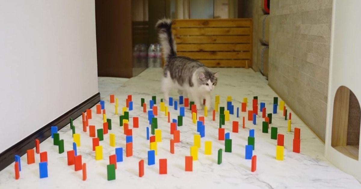 В сети появилось остросюжетное видео «кошка проходит через коридор с домино». Напряжение здесь в каждом кадре!