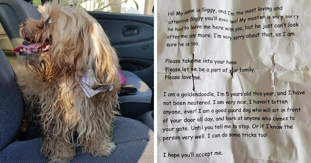 Мужчина спас собаку, на шее которой обнаружил записку. Там был не адрес хозяина, а его грустная история