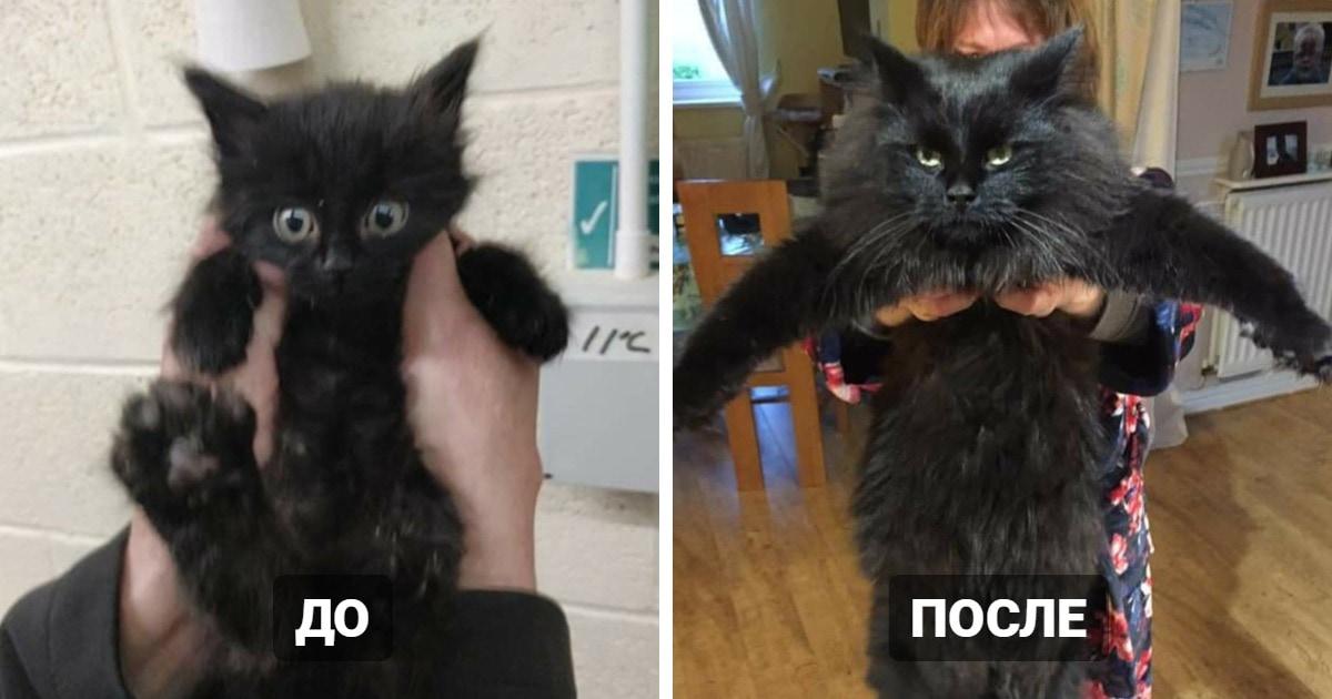 15 примеров того, как меняются коты, когда попадают в дом к людям, которые буквально позволяют им расцвести