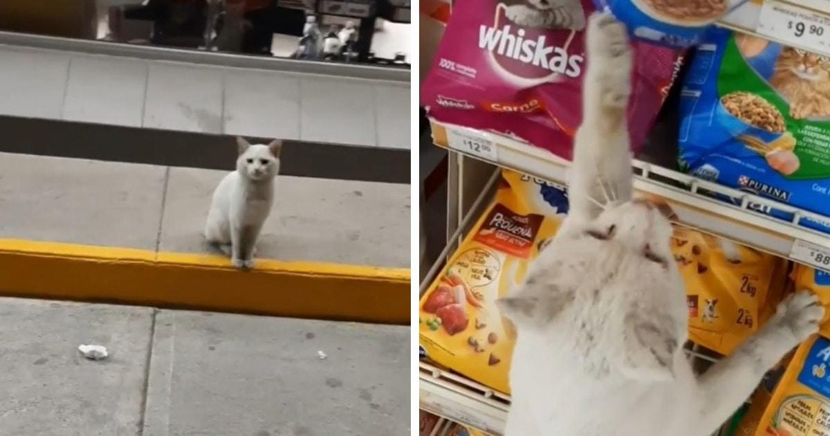 Хитрый бродячий кот заманил мексиканку в отдел для животных, однако получил не только корм, но и новый дом
