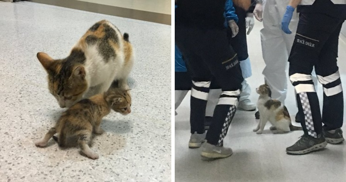 В Турции кошка принесла своего ребёнка в отделение скорой помощи. Человеческие врачи не могли им не помочь