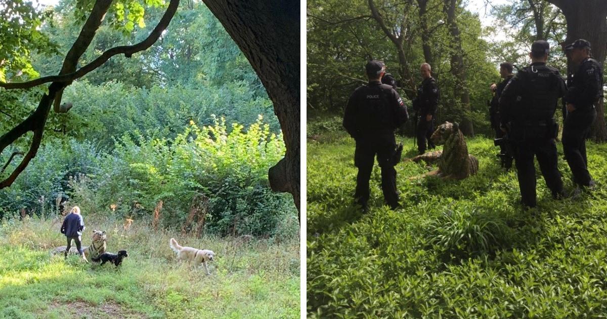 Тигра в британском лесу прибыла ловить полиция и вертолёт. Но операцию отменили, как только увидели его живьём