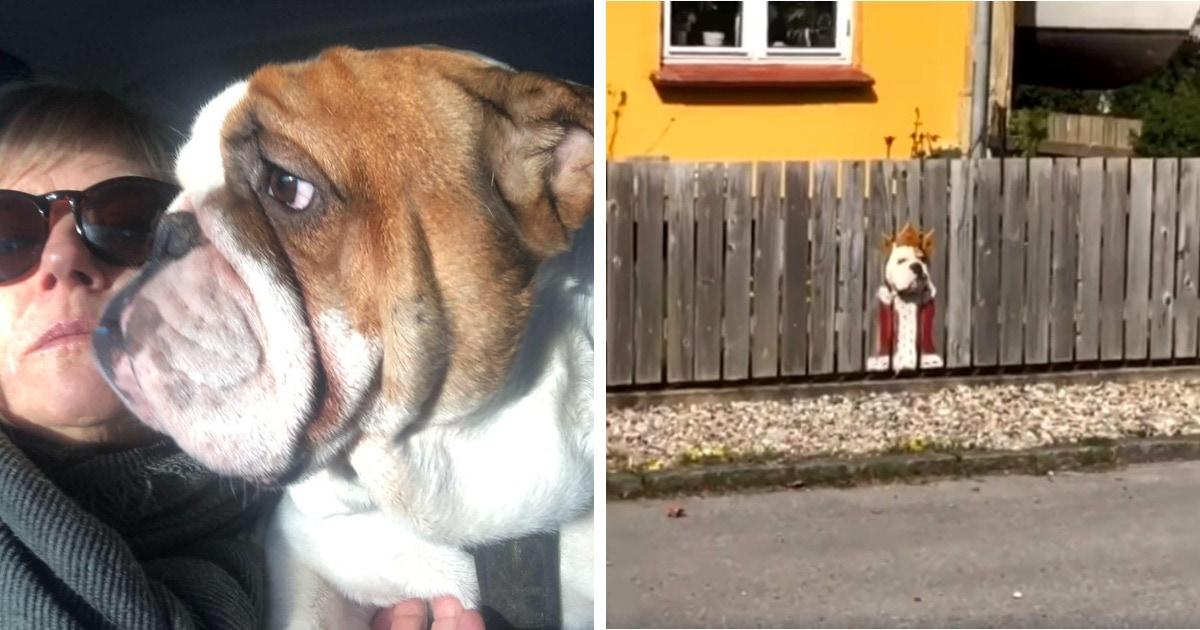 Бульдог из Дании любил смотреть на улицу через дыру в заборе и с помощью таланта хозяйки стал «Королём дороги»