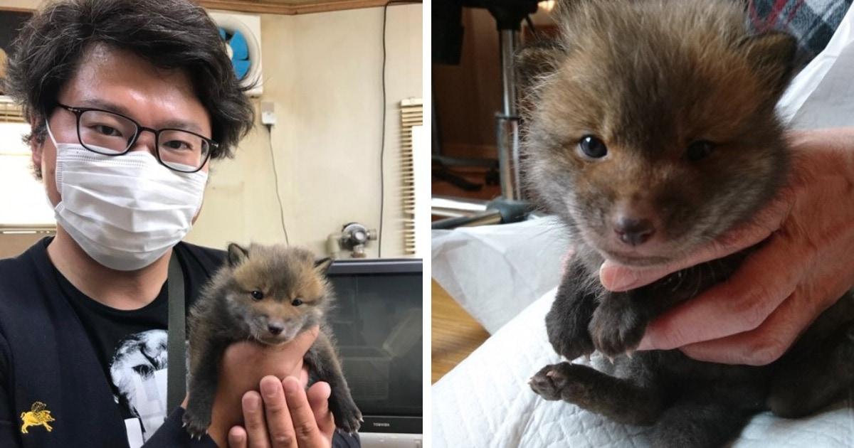 Японец нашёл возле дороги зверька и спас его. Он думал, что это щенок, но в сети ему объяснили, что это не так