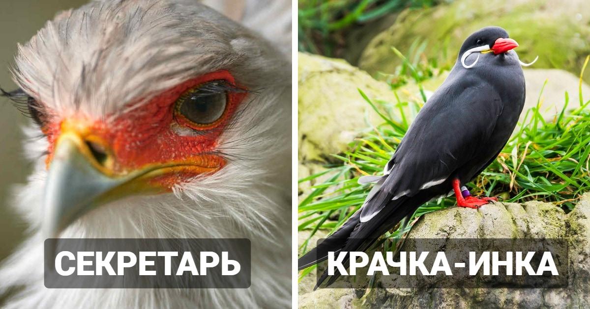 15 необычных и удивительных птиц, которые поражают воображение своей красотой