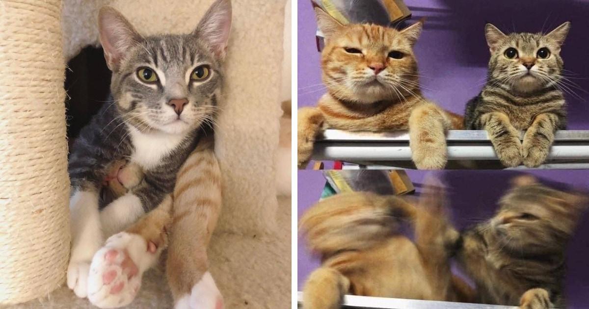 15 фотографий кошачьих братьев и сестёр, у которых от любви до ненависти всего одно «мяу»