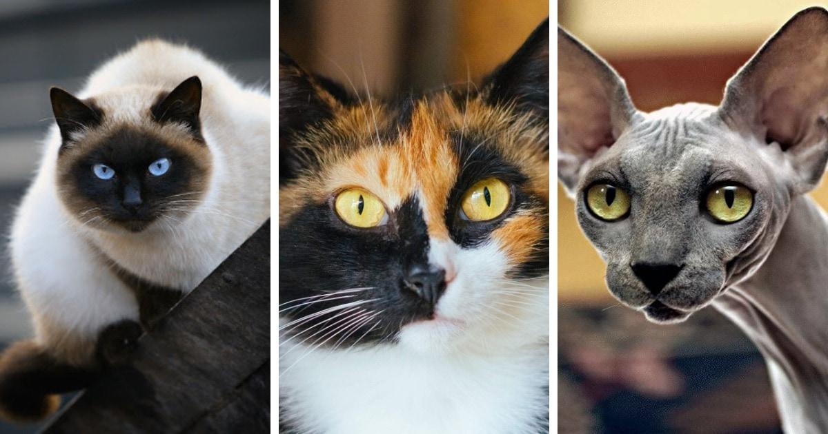 Самые красивые имена для кошек-девочек – 10 кличек для разных видов и пород