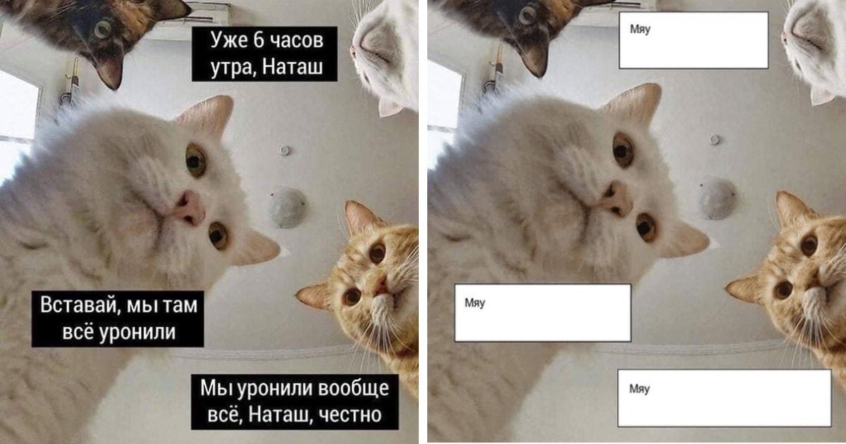Наташины коты не разговаривают, а мыш больше не кродеться: люди исправили мемы, но менее  странно не стало