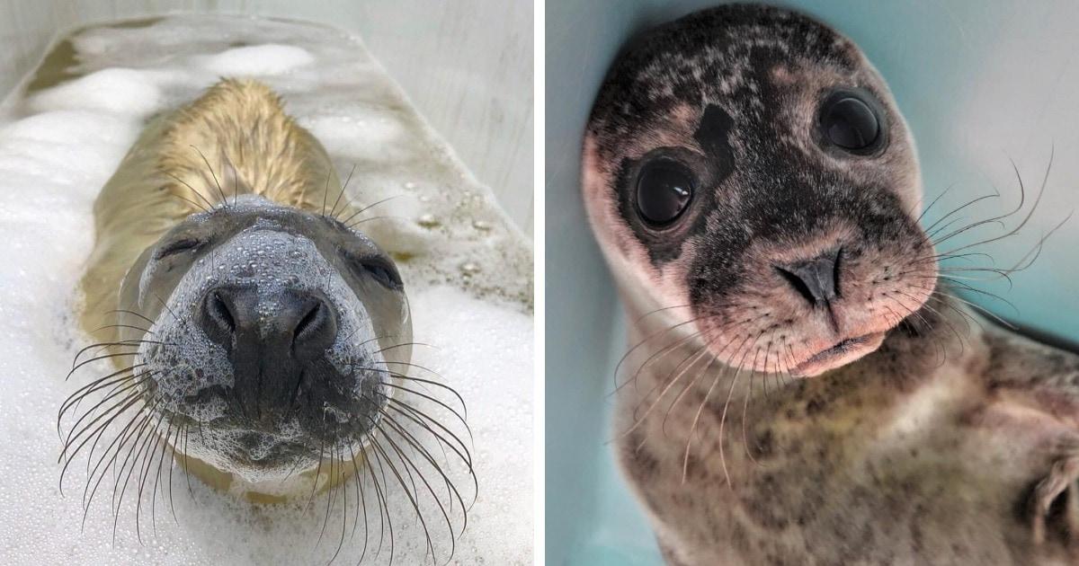16 фотографий очаровательных тюленей, которые в пух и прах разобьют вашу тоску своими мордахами