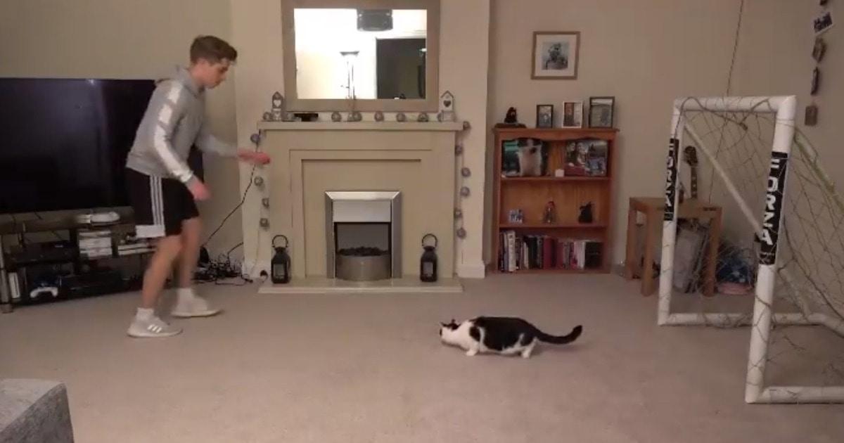 Футболист назвал кота в честь вратаря и был прав — хозяин не смог ему забить, а их видео понравилось «Баварии»