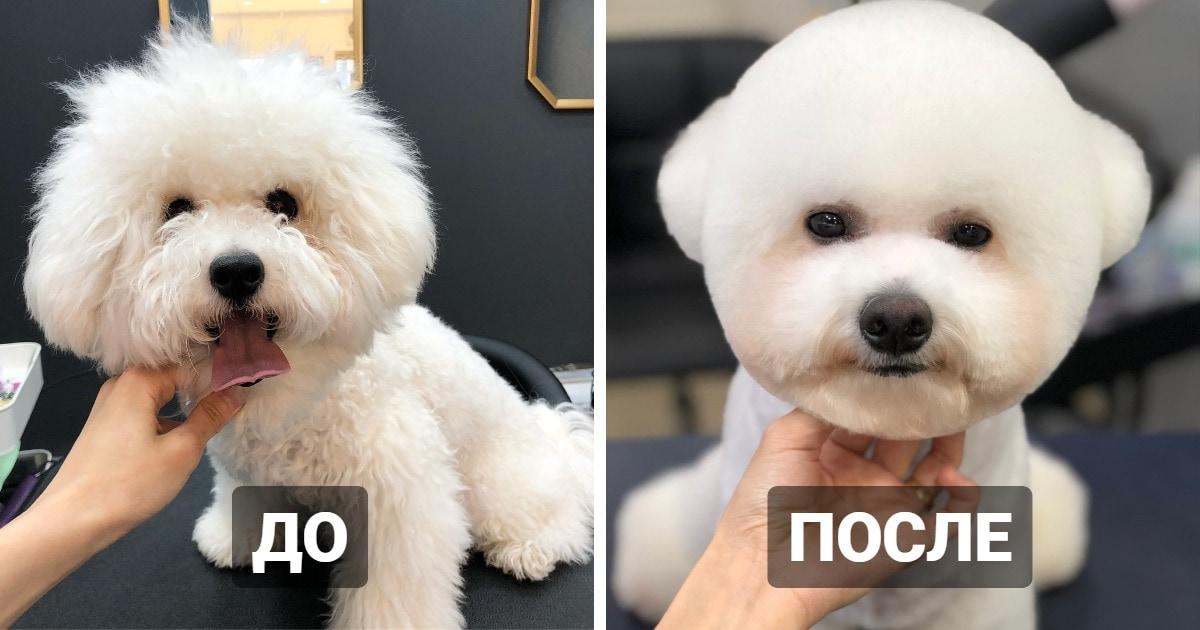 15 пёселей, которые сходили с грумеру и превратились в совершенно других собак
