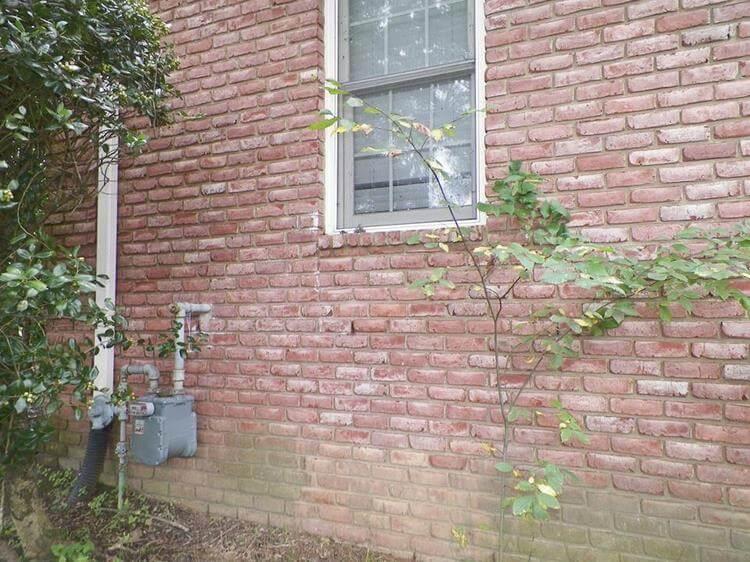 На данном изображении может находиться: растение, цветок, дерево и на улице