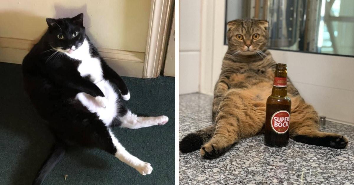 Пользователи сети показали своих котов, сидящих в странной позе. И получается у них это очень по-человечески