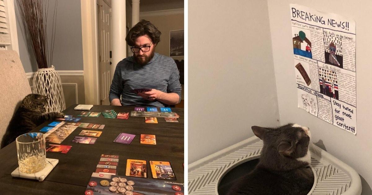 15 примеров того, как хозяева развлекали своих котов. Спойлер: смешно было и им самим