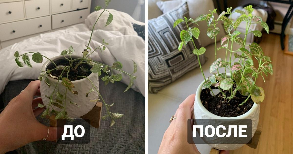 Люди выяснили, что комнатные растения — настоящие короли драмы. И наглядно это доказали