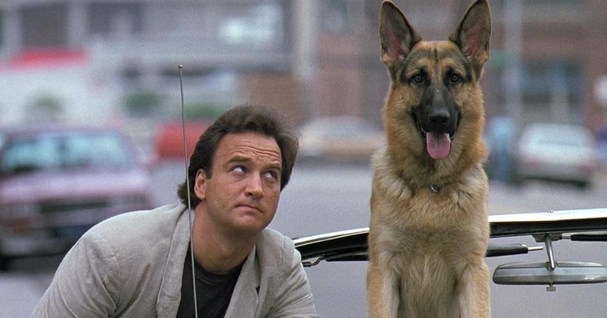 10 лучших фильмов про животных, их преданность и трогательную дружбу с людьми