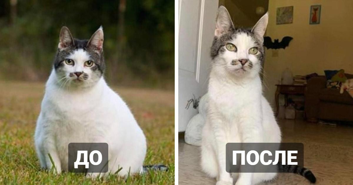 15 похудевших котов, которым удалось взять себя в лапы и победить пушистую кость