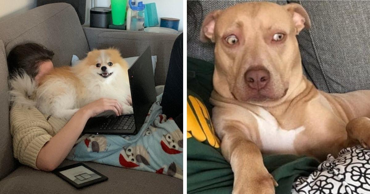 15 фотографий смешных и дурашливых собак, которые не дают своим владельцам заскучать ни на одну секундочку