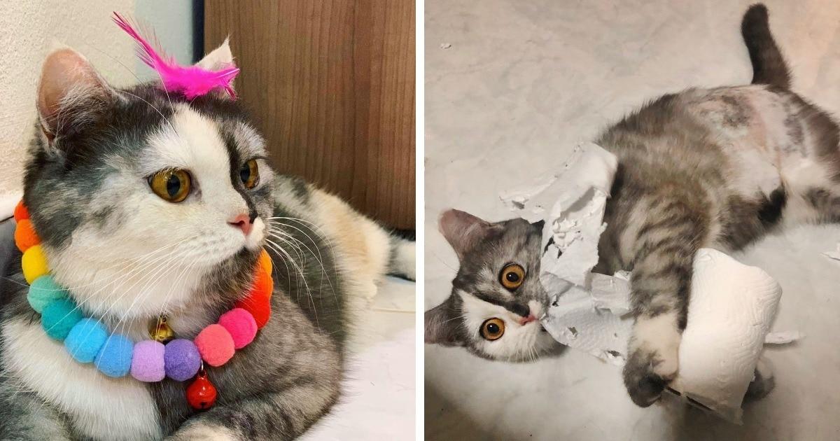 Кошка по имени Кошка покоряет Инстаграм. И понять секрет её успеха легко, посмотрев на неё анфас