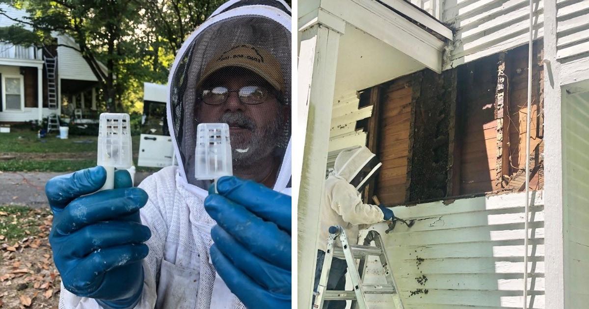 Укротитель пчёл из США поделился снимками самого крупного задания в своей жизни: улей рос в стенах дома 50 лет