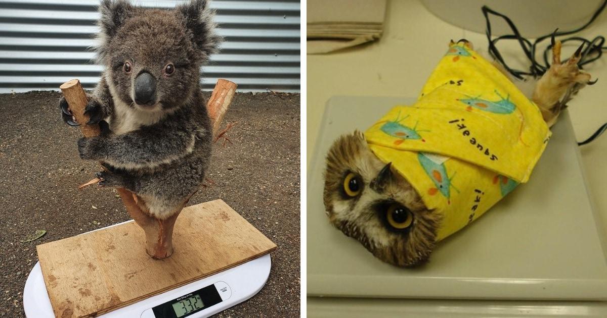 13 весёлых фотографий, которые показывают, на какие уловки приходится идти, чтобы взвесить животных в зоопарке