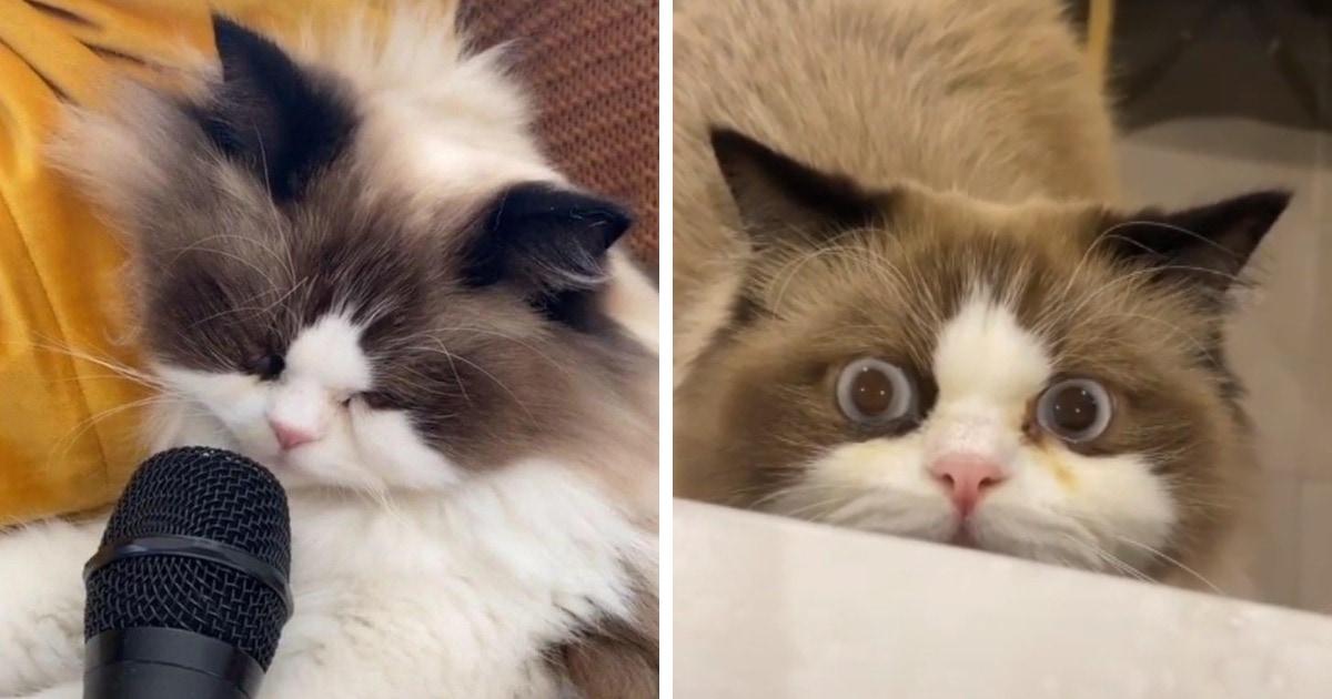 Хозяин поднёс микрофон к спящему коту, и его храп умилил интернет, но напугал самого хвостатого