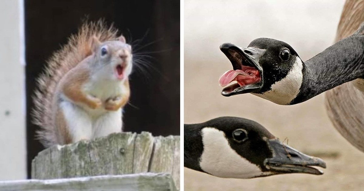 15 смешных и неловких фотографий диких животных, которые забыли, что такое фотогеничность