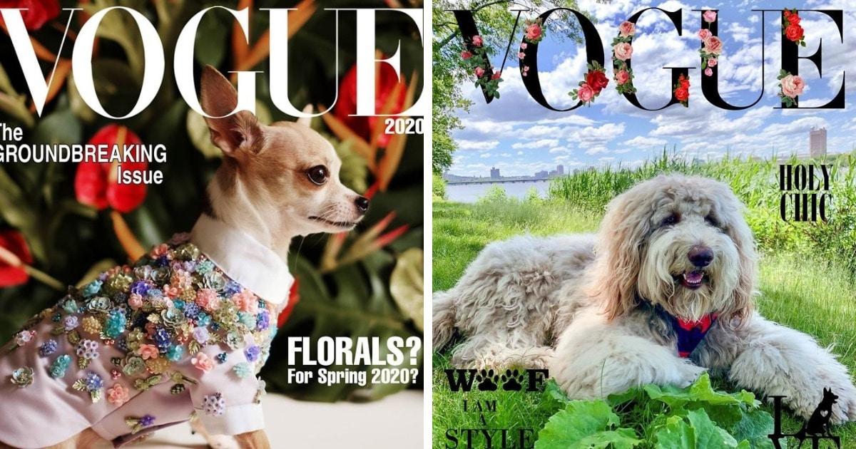 Хозяева собак превратили журнал Vogue в Dogue. И теперь в тренде виляющий хвост и мокрый носик