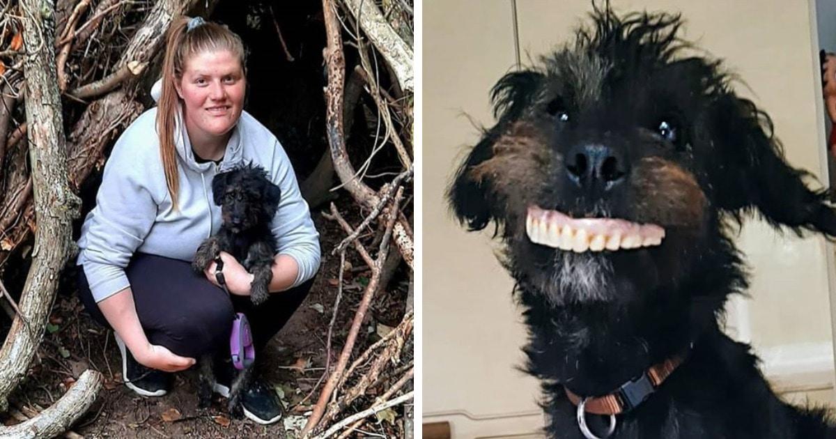 Пёс украл вставную челюсть, тут же примерив её на себя. Результат оценила и хозяйка, и пользователи сети