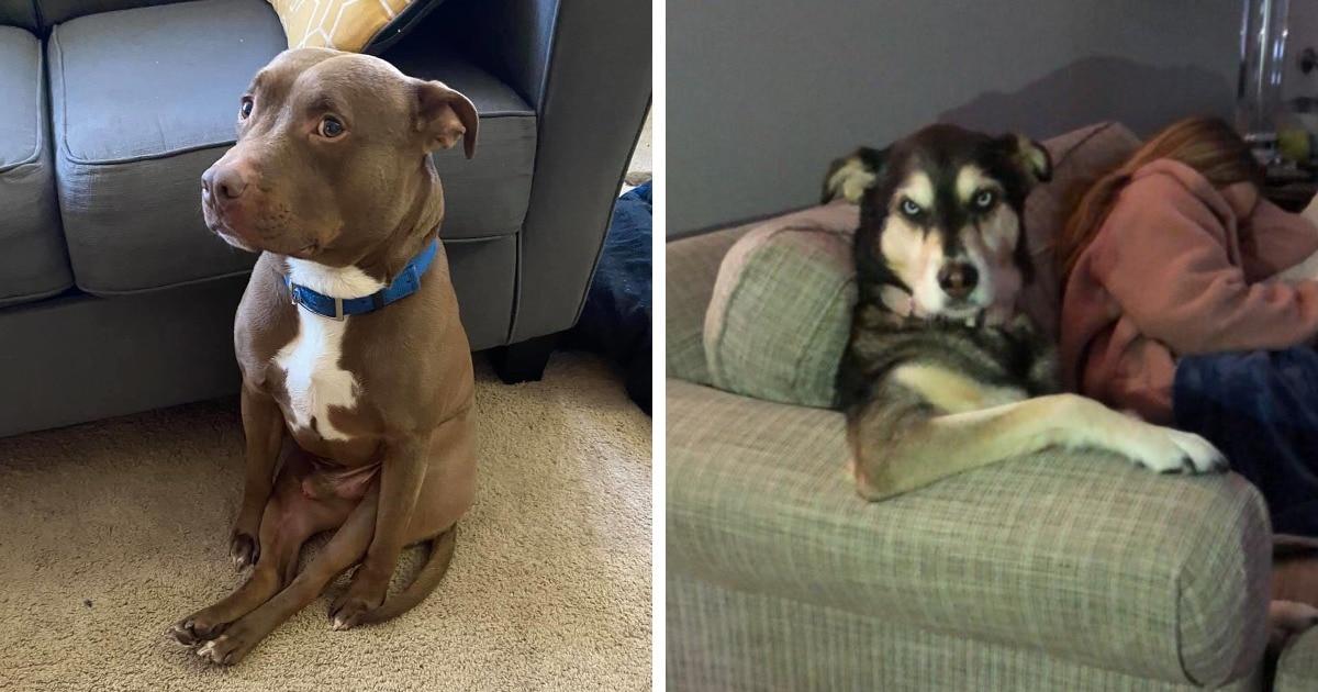 15 фотографий крайне странно сидящих собак, которые совершенно не понимают, почему над ними хихикают хозяева