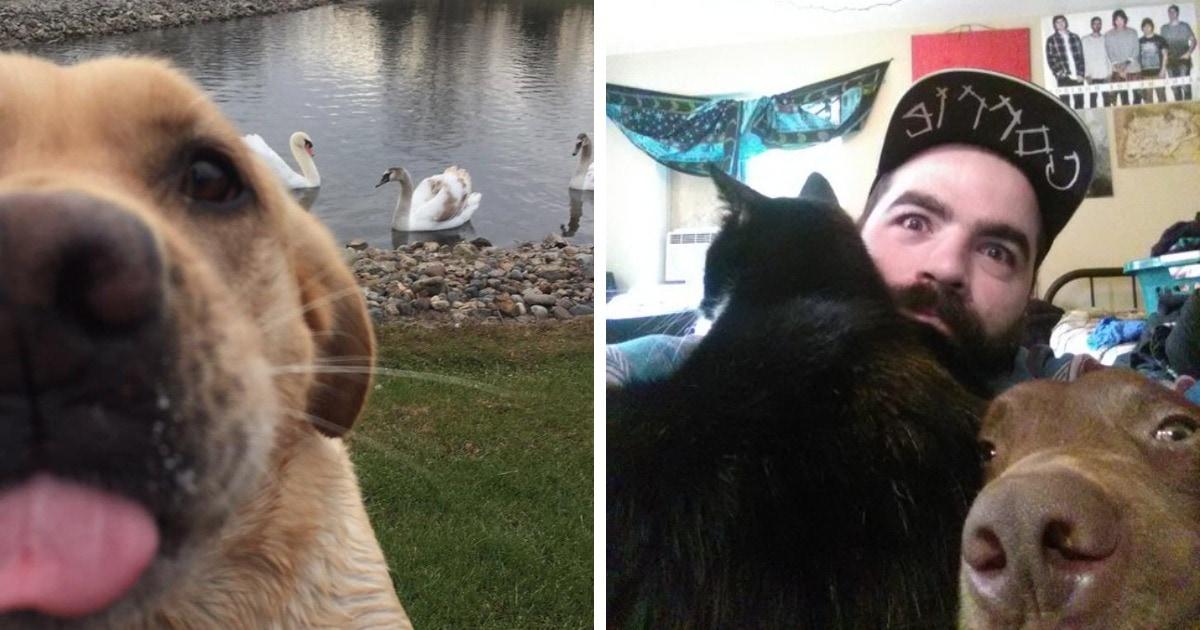 15 случаев, когда животные ревновали своих хозяев ко всему, что движется, нисколько этого не скрывая
