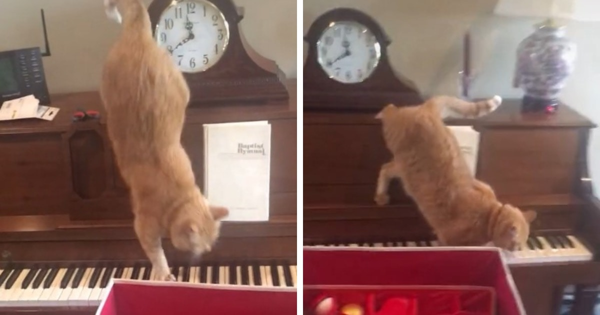 Рыжий кот наступил на клавиши и, запаниковав от звука, сыграл мелодию, которой позавидуют даже крутые джазмены