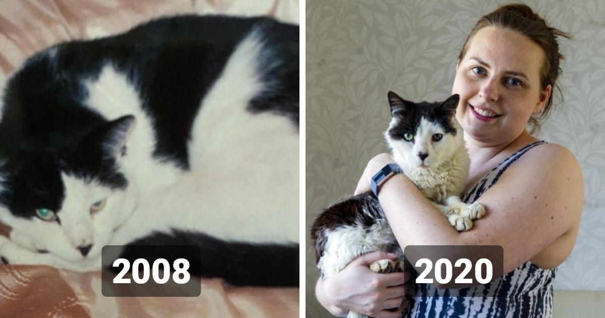 Девушка потеряла кота, когда ей было 19, и нашла только в 31. Спасибо чипированию и местной кошатнице