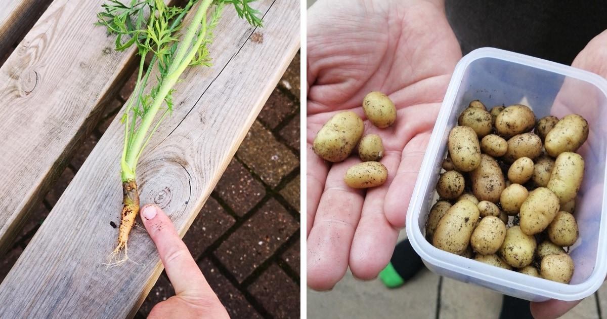 Начинающие садоводы показали овощи, которые вырастили на карантине. И иначе как провалами их не назовёшь!