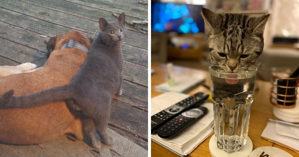 18 случаев, когда люди обнаруживали у себя дома котов. Но это были вообще не их коты!