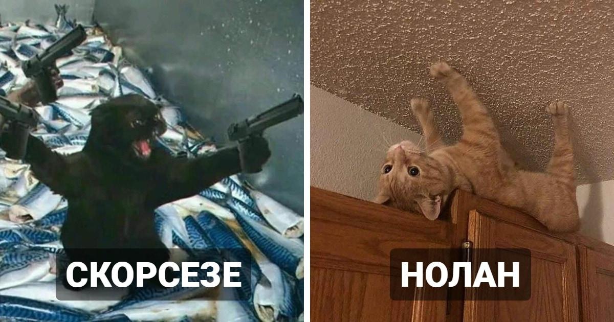Мемным котам прошлого дали новую жизнь, представив их в образе культовых режиссёров. Эксперимент удался!